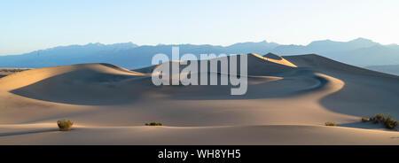Mesquite flat dune di sabbia nel Parco Nazionale della Valle della Morte, California, Stati Uniti d'America, America del Nord
