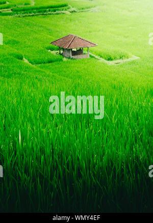 Angolo di Alta Vista sul verde dei campi Foto Stock