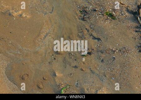 Fresca acqua sorgiva spingendo fino a una piscina su una spiaggia di sabbia con il disturbato granelli di sabbia guardando come piccole eruzioni vulcaniche.