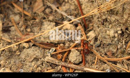Angolo di Alta Vista di Ant su terra