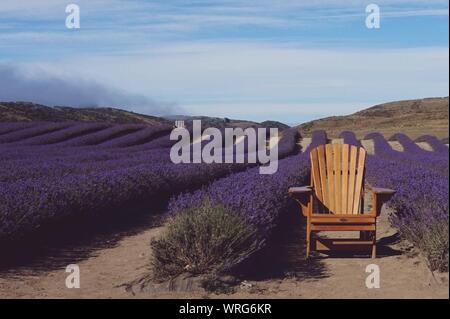 Vuota la sedia di legno nel mezzo di lavanda letti sul campo contro Sky