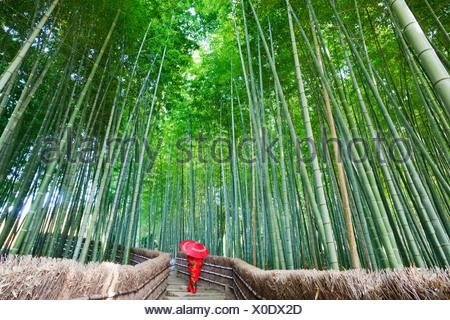Donna che cammina in una foresta di bamboo, Adashino-nenbutsu-ji, Arashiyama, prefettura di Kyoto, Kinki Regione, Honshu, Giappone Foto Stock