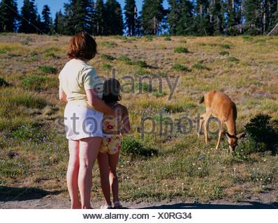 La madre e il bambino guardando black Tailed Deer. Hurricane Ridge, il Parco Nazionale di Olympic, Washington, Stati Uniti d'America Foto Stock