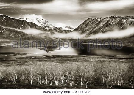 Scenic colpo di alberi smerigliato dal tranquillo lago con montagne innevate in Jotunheimen, Norvegia Foto Stock
