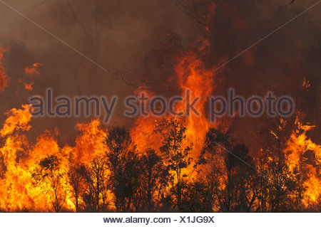 Bush fire nel Queensland Austtralia
