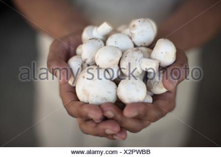 Close up di mani di funghi Foto Stock