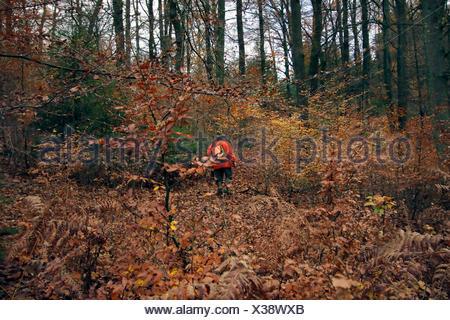 Hunter (driver) la pettinatura attraverso la foresta di autunno con una camicia di colore del segnale durante un battue, Germania Foto Stock