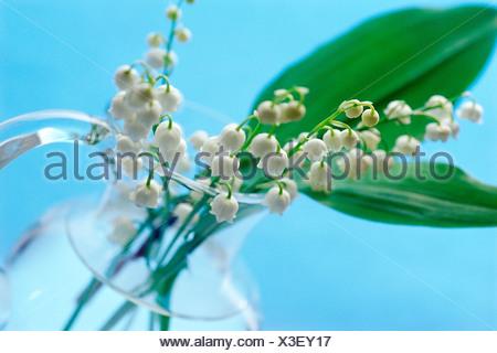 Il giglio della valle in un vaso di vetro Foto Stock