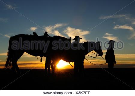 Un cowgirl e un cowboy standing accanto ai loro cavalli al tramonto, Saskatchewan, Canada Foto Stock
