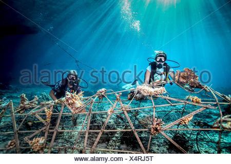 Vista subacquea femminile di subacquei che fissa un seacrete sul fondale, (acciaio artificiale reef con corrente elettrica), Lombok, Indonesia Foto Stock