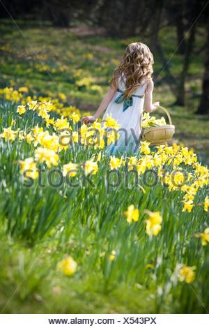 Una giovane ragazza la raccolta di narcisi in un cestello Foto Stock