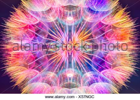 Pastello colorato sfondo - colori vividi astratto fiore di tarassaco - extreme closeup con soft focus Foto Stock