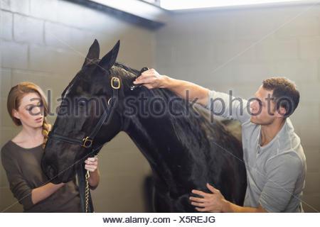 Stablehands toelettatura del cavallo nero in maneggio Foto Stock