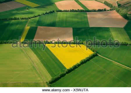 Vista aerea, campi di grano e canola campi separati da siepi, Erbes-Buedesheim, Renania-Palatinato, Germania, Europa Foto Stock