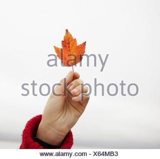 Una giornata al lago Ashokan. Una giovane ragazza in un inverno rosso ponticello a maglia con in mano una foglia di acero. Foto Stock