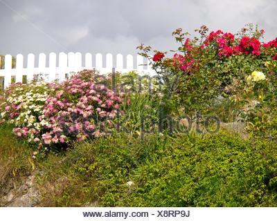 Recinzioni Legno Per Giardino.Giardino Norvegia Recinzione Recinzione In Scherma Giardini
