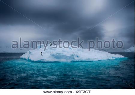 L'Antartide, due pinguini in piedi sul ghiaccio berg Foto Stock
