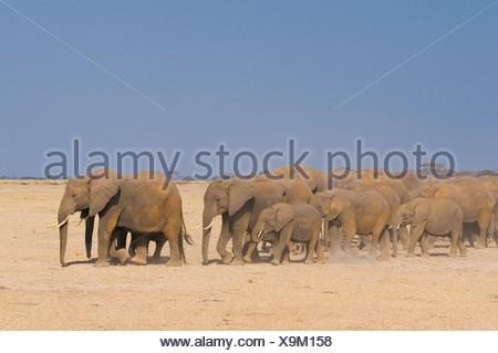 Gli elefanti nel parco nazionale della sierra nevada, Spagna Foto Stock