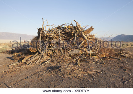 Nevada USA pila di detriti di legno e trucioli Foto Stock