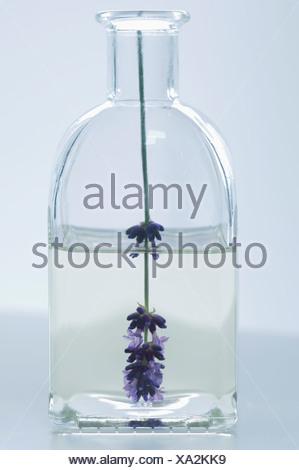 Olio di lavanda in bottiglia con fiore, close up Foto Stock