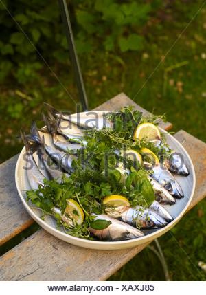 Sgombro pesce con fettina di limone e le erbe aromatiche Foto Stock