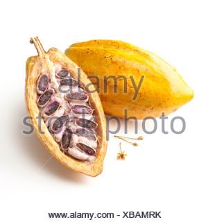 Theobroma cacao, fava di cacao Foto Stock