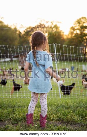Ragazza giovane azienda, guardando i polli attraverso la recinzione di filo, vista posteriore