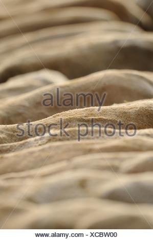 Sheeps Foto Stock