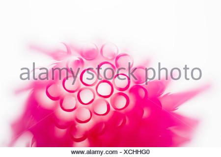 Studio shot di rosa cannucce potabile Foto Stock