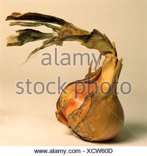 Onion con peeling pelle Foto Stock