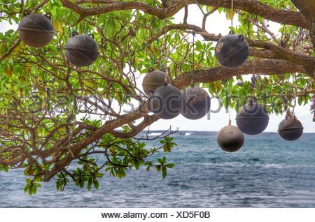 Basso Angolo di visione delle sfere metalliche appeso da albero contro il mare Foto Stock