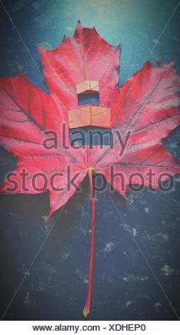 Angolo di Alta Vista di autunno rosso Maple Leaf Foto Stock