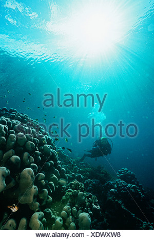 Raja Ampat, Indonesia, Oceano Pacifico, scuba diver in fondali bassi con i raggi di luce che promana dalla superficie Foto Stock