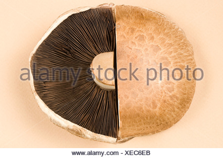 Tagliata ai funghi Foto Stock