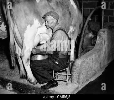 1930 1940 agricultor idoso em macacão ORDENHA VACA GUERNSEY Foto de Stock
