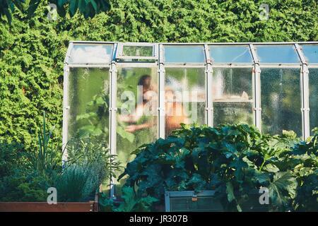 Os trabalhos sobre a horta. Jardineiro dentro da casa de vegeta o. Foto de Stock